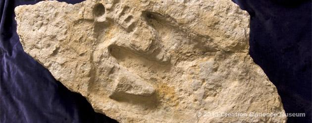 delk_cretaceous_footprint