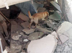 Dayko in rubble