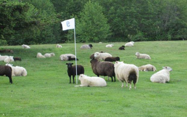 As a young person, Willett played on a makeshift course in this sheep field