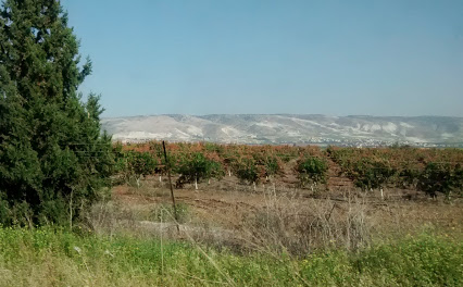 Agriculture in Lower Galilee