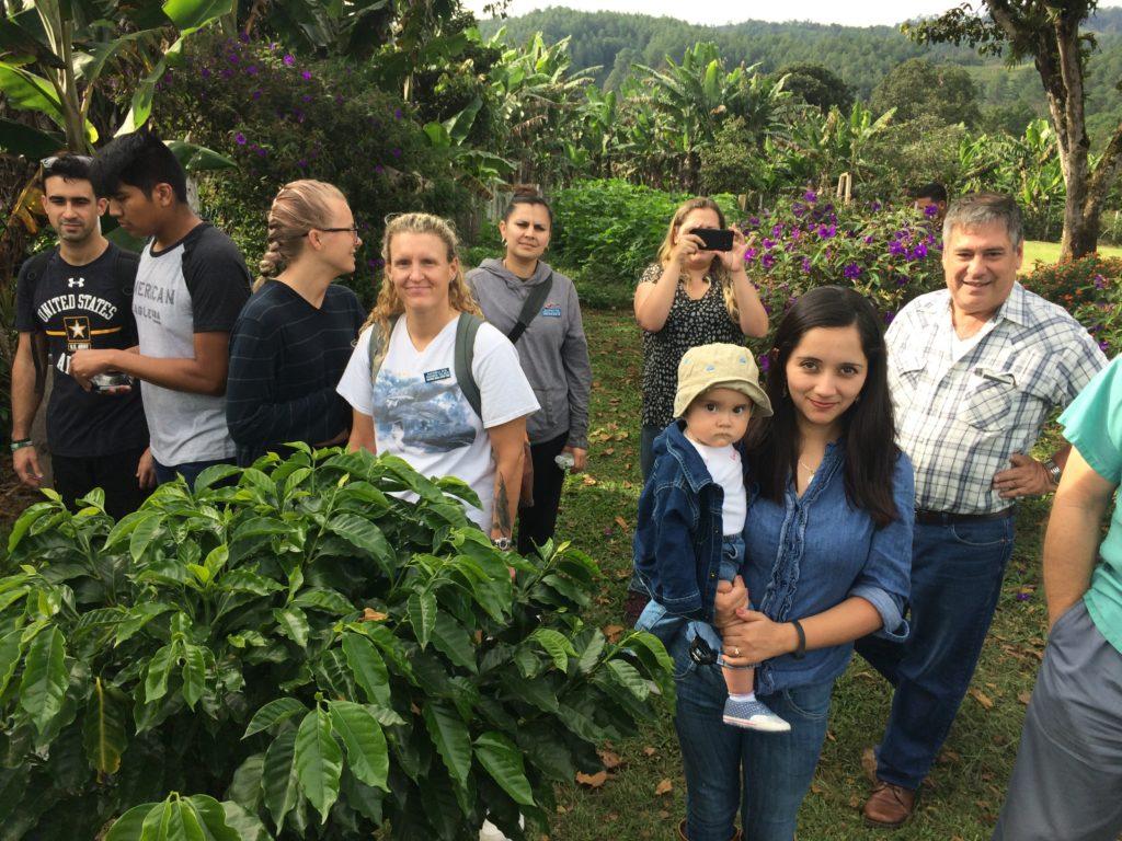 coffee plantantion Guatemala