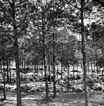Hundreds of corpses on ground beneath trees at Bergen-Belsen concentration camp.
